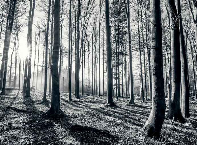 Black and white forest wallpaper murals | Online store